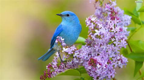 bird background beautiful bird wallpapers hd picture gallery free