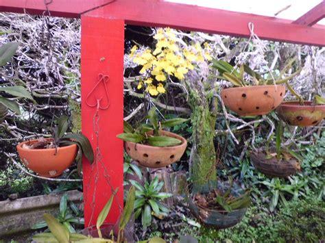 imagenes de jardines con orquideas jardines con orquideas y bromelias