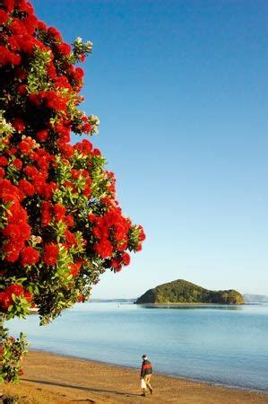 best real christmas tree nz 256 best images about new zealand on west coast milford sound and lakes