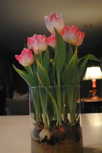 forcing tulip bulbs ten ways to freshen up your house for spring flair for home