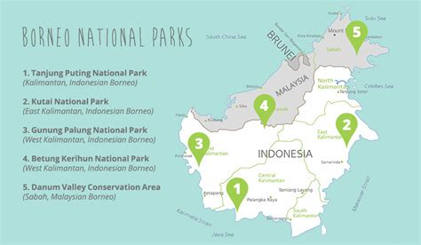 Borneo Indonesia five places to see orangutans in indonesia the