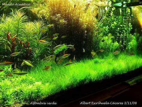 aquascape carpet plants green carpet aquascaping aquatic plant central