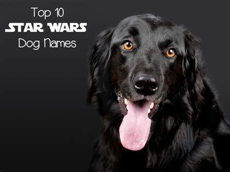 wars puppy top 10 wars names dogvills