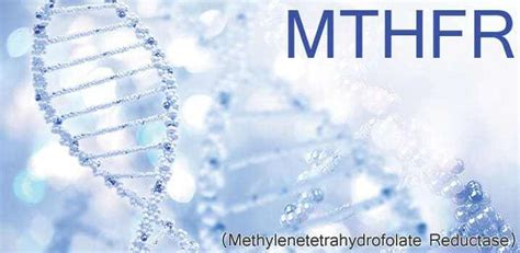 Mthfr Folic Acid Detox by Cancer Compass An Alternate Route Methylation And Mthfr