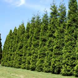 privacy trees fast growing trees