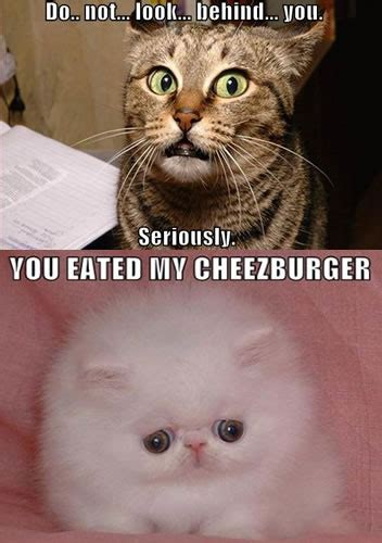Cheezburger Cat Meme - i can haz cheezburger cat meme foto bugil bokep 2017