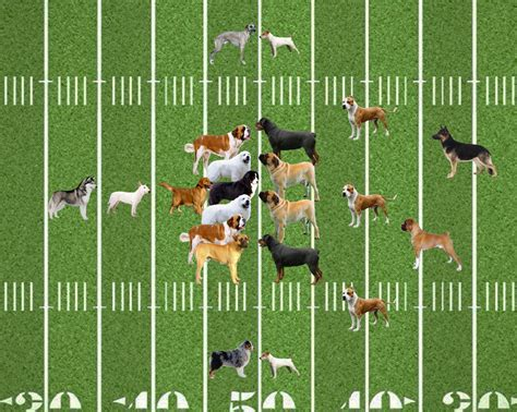 puppy football football which breeds are best suited for the gridiron sbnation