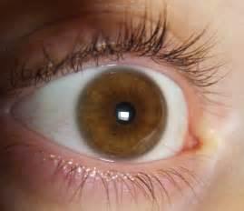 le occhio occhio