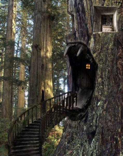 awesome tree houses awesome tree house rofl lol lmao