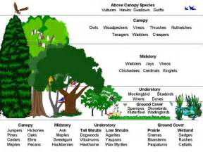 a walk in the woods ecology lesson plan forestnation