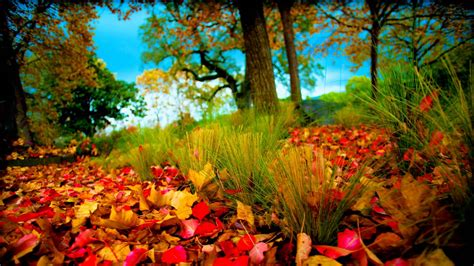 download colorful autumn 3d live wallpaper free for nature hd wallpapers 1080p wallpaper cave