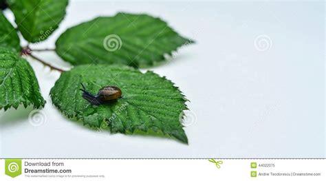 Dust Snail Green snails stock photo image 44022075