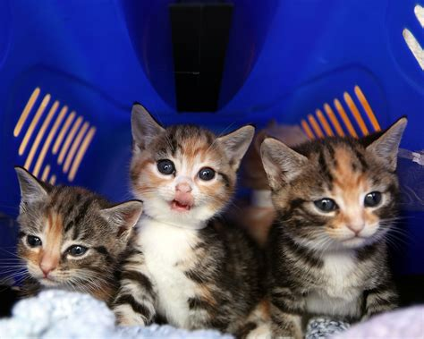 rspca responds to claims kittens being sold on facebook