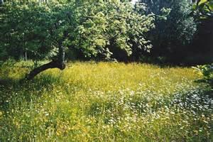 Wild Flower Meadow Seeds - wildflower meadow www galleryhip com the hippest pics