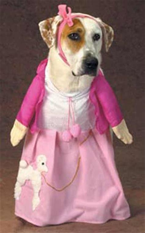 puppies dressed up pin dressed up on