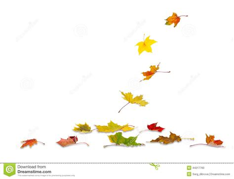 Autumn Maple Leaves Falling Stock Illustration Image Fall Leaves On White Background