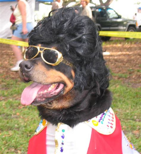 costumes for rottweilers 11th annual canine oktoberbest costumes