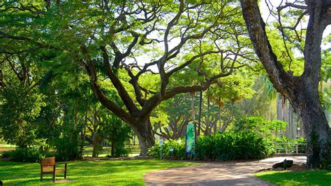 Darwin Botanic Gardens George Brown Darwin Botanic Gardens Darwin Northern Territory Attraction Expedia Au