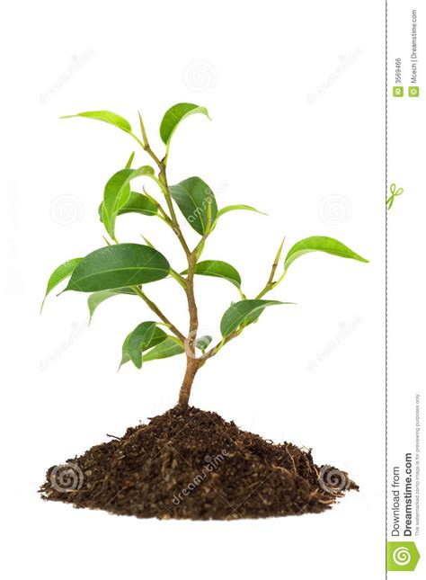 images of plants new plant life royalty free stock image image 3569466