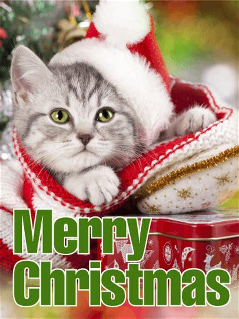 santa cat merry christmas card birthday greeting cards  davia