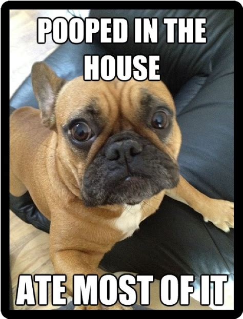 dog pooped in the house funny dog humor french bulldog pooped in the house refrigerator magnet ebay
