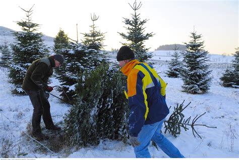 weihnachtsbaum selber schlagen im sauerland
