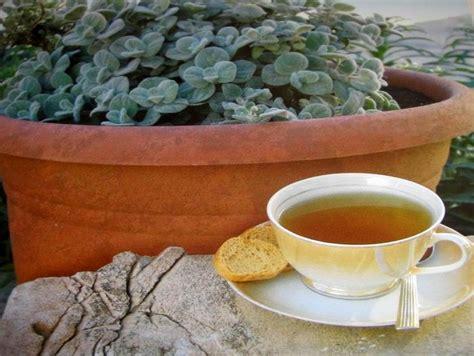 Kamaria Tea Bath 15gr dittany or diktamos of crete arolithos