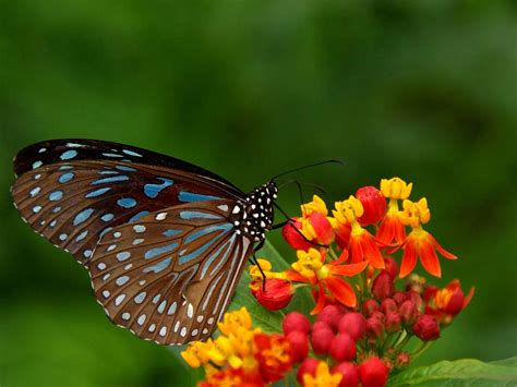 wallpaper flower with butterfly beautiful natural scenery a butterfly perched on a flower
