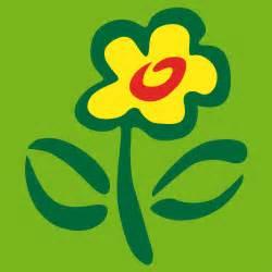 grüne vase anthurie bestellen suche anthurie bei blumenversand