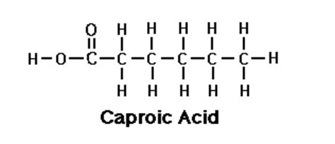 caproic acid food wiki food network solution