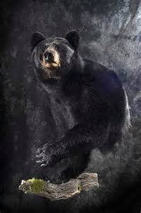 Half bear mounts submited images pic2fly