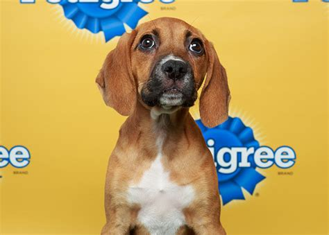 animal planet puppy bowl mvp vote meet the of puppy bowl x orlando sentinel