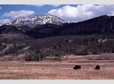 Der Yellowstone-Nationalpark - Medienwerkstatt-Wissen ... Yellowstone Park Naturschutz