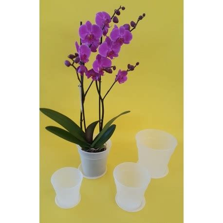 orchidee vaso trasparente veca vaso trasparente living casa arredo giardino fiori