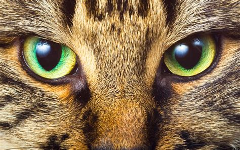 what color are cats can animals see color
