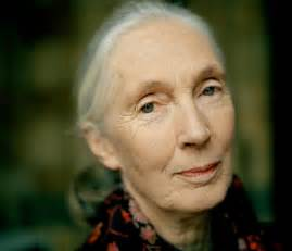 Jane goodall what i know intelligent travel