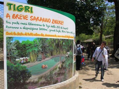 giardino zoologico napoli lo zoo di napoli 171 il comune e la mostra ci boicottano