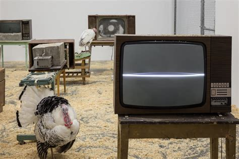In A Box Live by Review Live Turkeys And Dead Televisions In Wolf Vostell