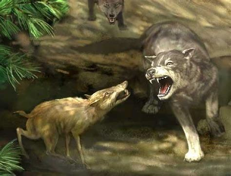 dire wolf fossils dire wolf