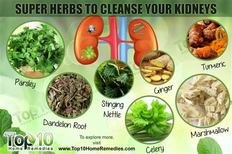 Food For Kidney Detox by Top 10 Herbs To Cleanse Your Kidneys Top 10 Home