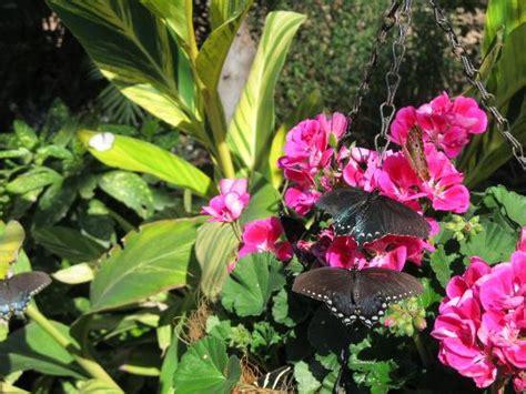Butterfly Exhibit Botanical Gardens Butterfly Exhibit Photo De Desert Botanical Garden Tripadvisor