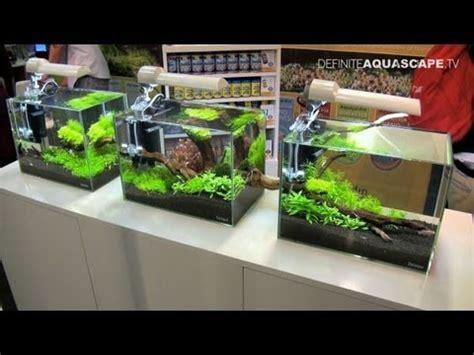 cara membuat aquascape iwagumi nano cara membuat aquascape di aquarium dengan cara yang mudah