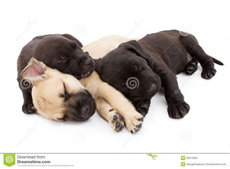 three puppies three puppies taking a nap together stock photography image 20372262