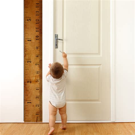 wall sticker growth chart wall decal ruler growth chart wallsorts