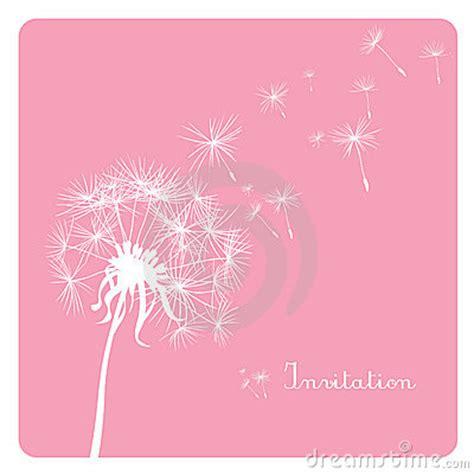 wallpaper pink dandelion dandelion on pink background royalty free stock photos