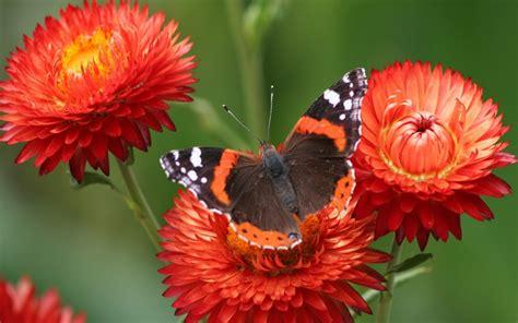 imagenes mariposas bellas hermosas mariposas taringa
