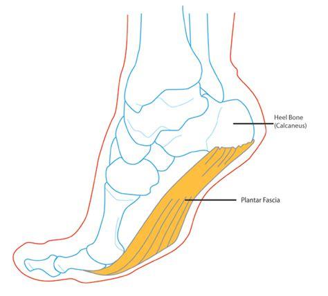 plantar fasciitis diagram plantar fascia anatomy plantar aponeurosis anatomy