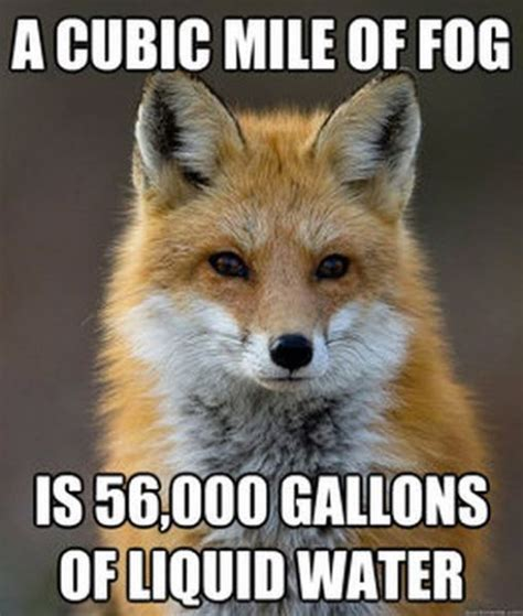 Fox Meme - get your fact fix with this great fox meme memes