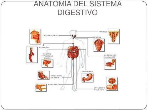 aparato digestivo sistema digestivo humano ppt