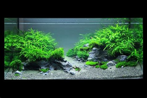 aquascape pictures aquascape aquarium lighting images